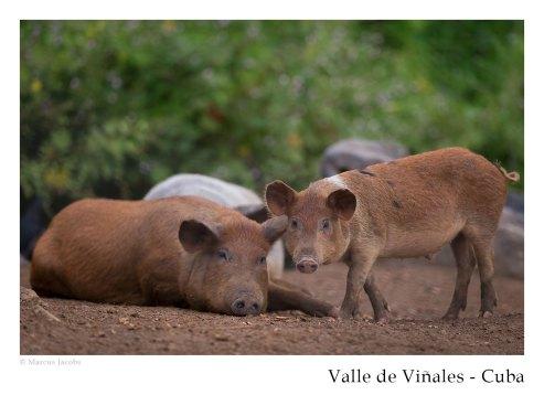 vinales_kuba_79