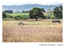vinales_kuba_86