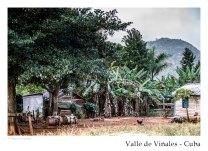 vinales_kuba_93