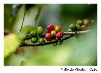 vinales_kuba_96