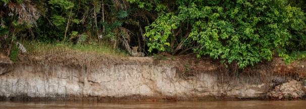 Panama Jungle7