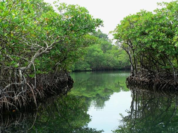 Panama Jungle8