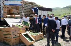 Çiftçilere Sebze Fidesi desteği