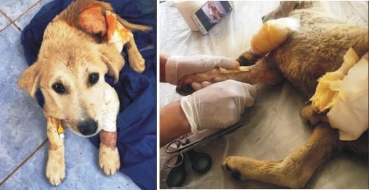 Yavru köpeği yaralayan şahıs yakalandı