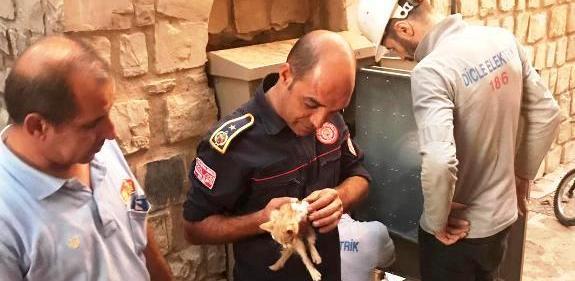 Elektrik panosuna sıkışan yavru kedi kurtarıldı