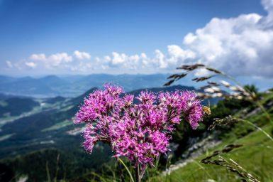 Austria-326