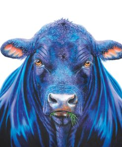 Ace the Bull-FRAMED MATTED PRINTS-MAREE DAVIDSON