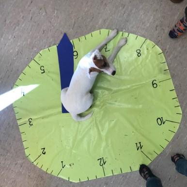 Ein Therapiehund lehrt die Uhrzeit!