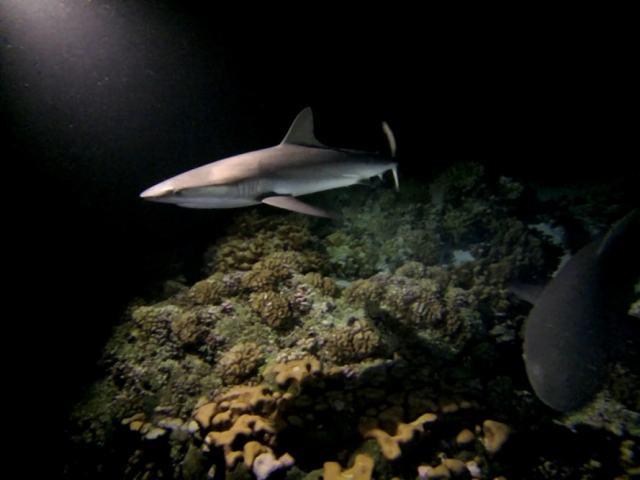 czy nurkowanie z rekinami jest bezpieczne-