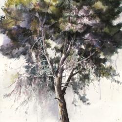 Pine Tree Portrait No.2, 112X76 cm