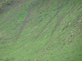 Deer highways in the grass.