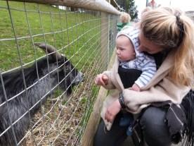 William meets a goat.