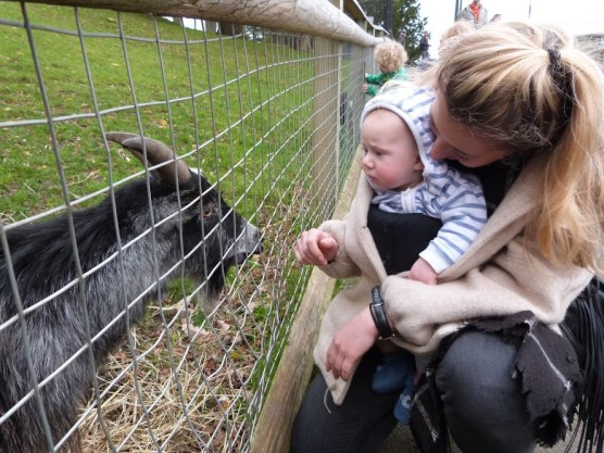 William meets a goat.
