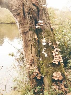 A fungus-colonised tree near the lake.
