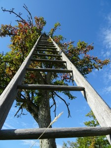 A ladder to climb
