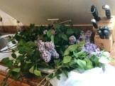 Dad's lilacs