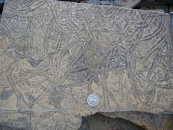 Beautiful trace fossils in the Daye Formation, near Guiyang, China.