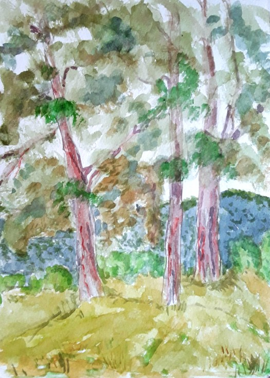 A finished drawing of a copse of pine trees  - a finished drawing done en plein air.
