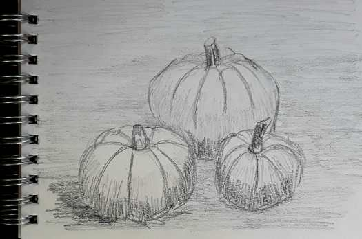 A quick pencil sketch of three pumpkins, ripening on the soil.