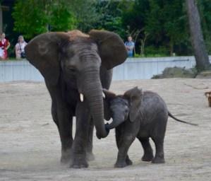 kleine-madiba-speelt-met-haar-grote-zus-bongi