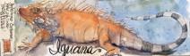 Iguana Print 6x16