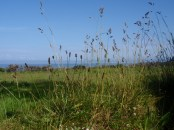 County Antrim Northern Ireland, author's picture