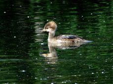 Hyland Park Reserve 100