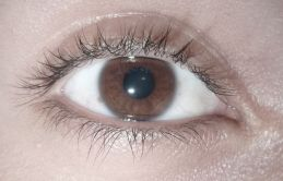 800px-Brown_eye