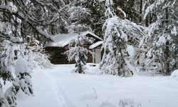 Cabin Fever, Winter, Blizzard, Marge Fenelon