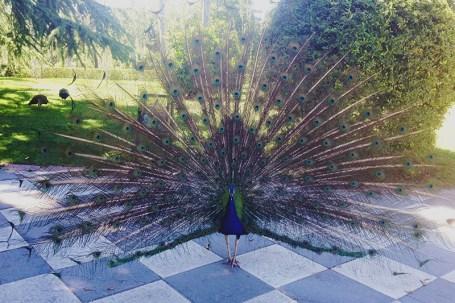 Parco del Retiro madrid5