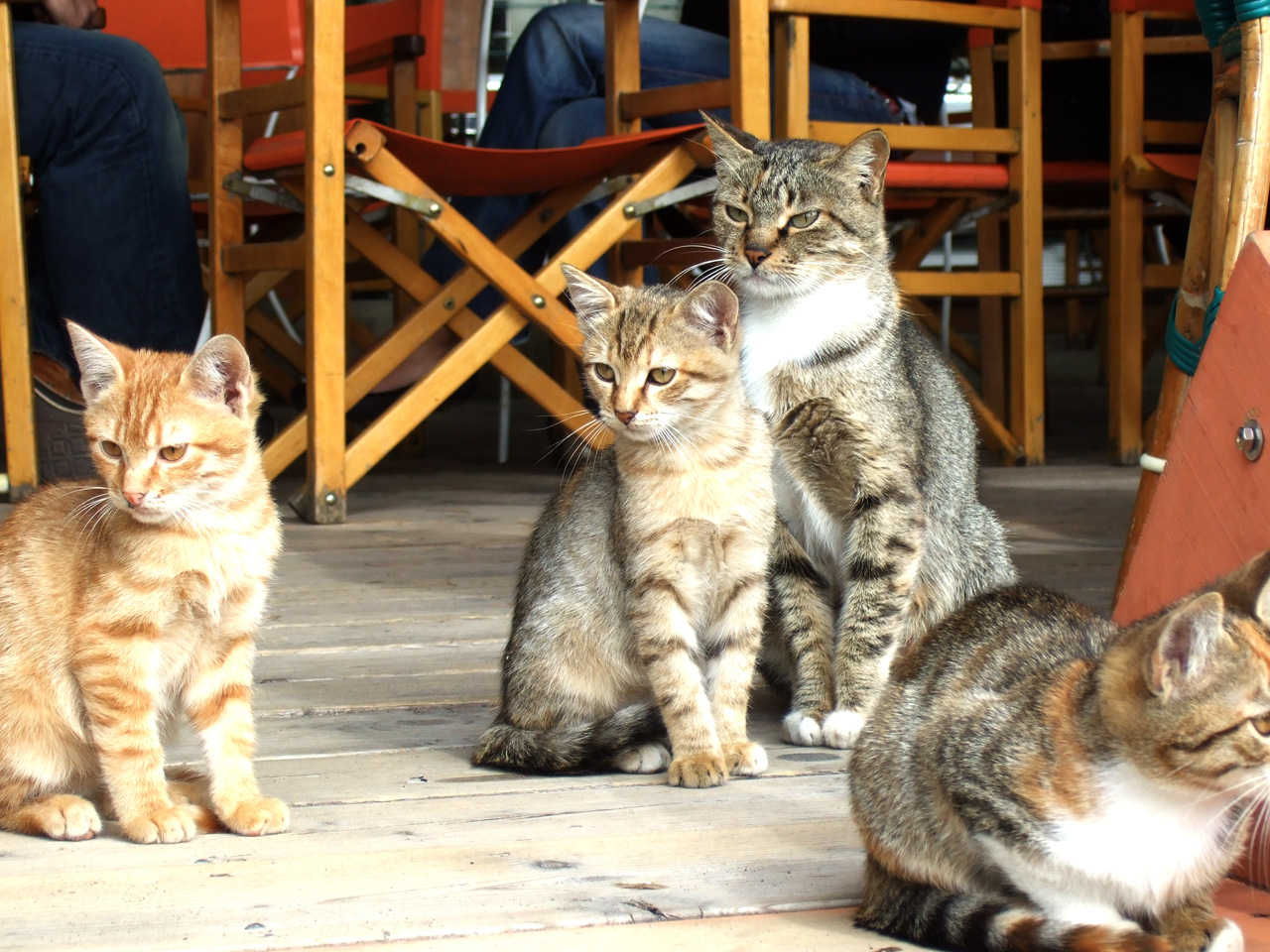 Cats of Italy