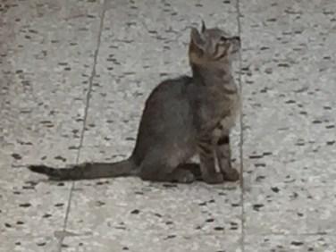 Polignano cat