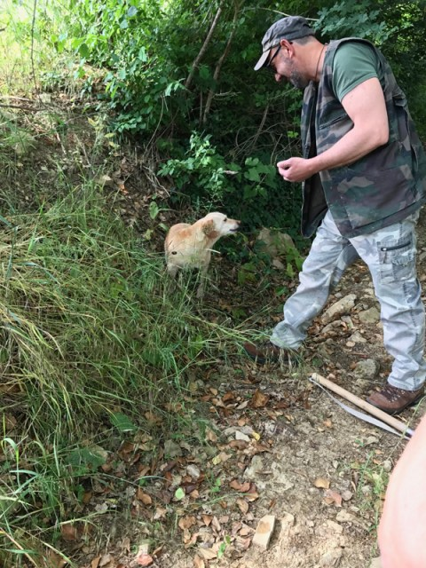 Truffle hunter Le Marche Photo by Margie Miklas