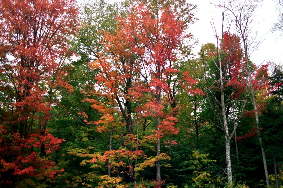 New England fall colors Photo by Margie Miklas