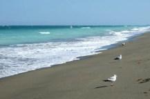Seagulls Hutchinson Island Beach Florida Photo by Margie Miklas
