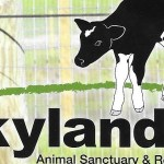 Hope and Kindness= Skylands Animal Sanctuary and Rescue