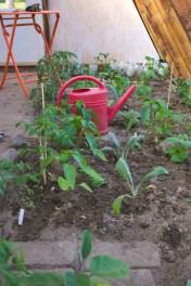 Bepflanzung am 1.6.2015