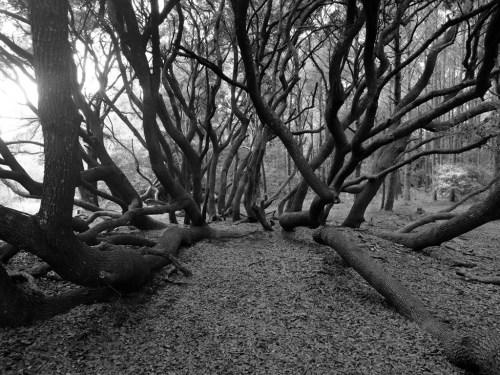 Huntington Reaching by Margo Millure (margomillurephotography.com)