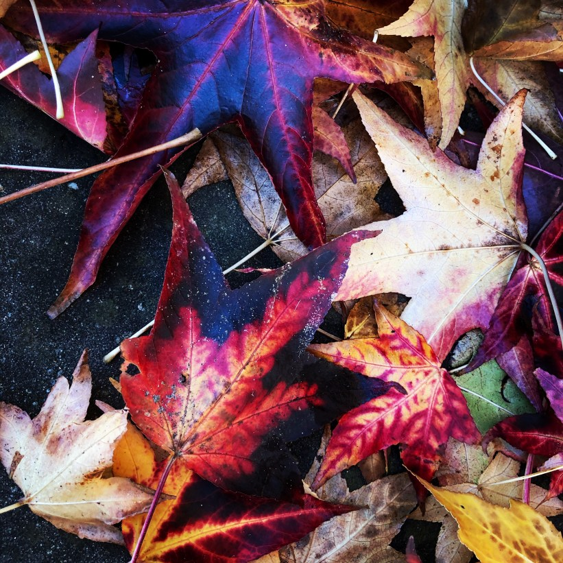 Fallen leaves - Herfst 2019