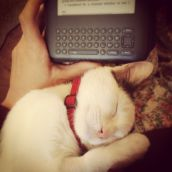 The cat slept while I read
