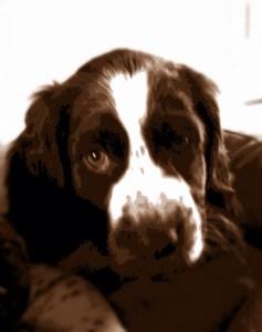 Monty's first portrait!