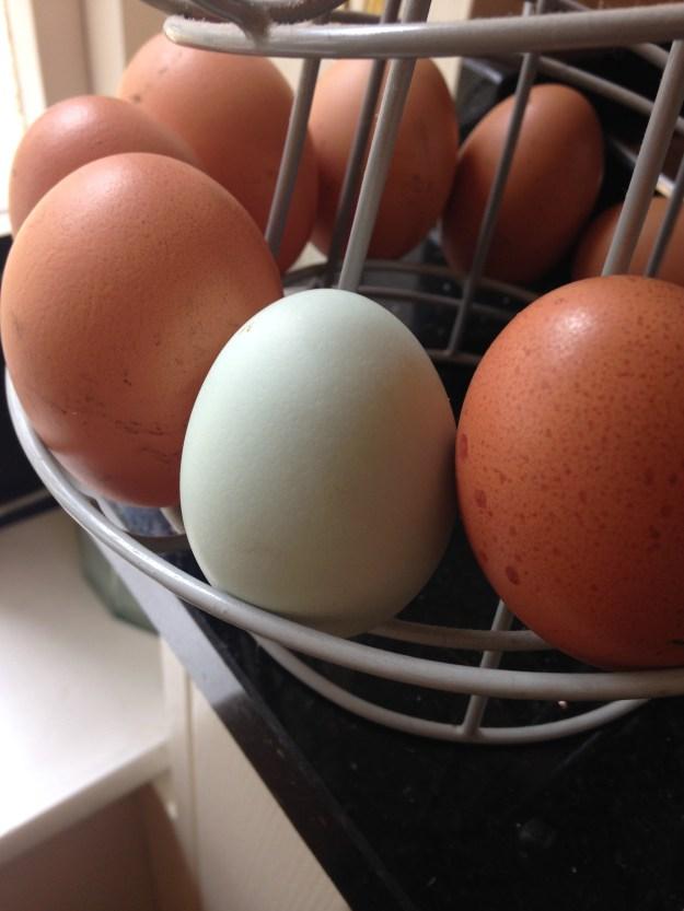 Aggie egg