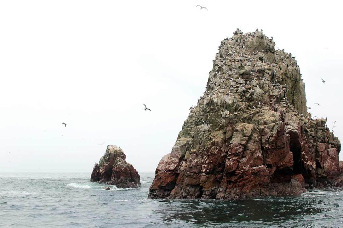 Islas Ballestas 5