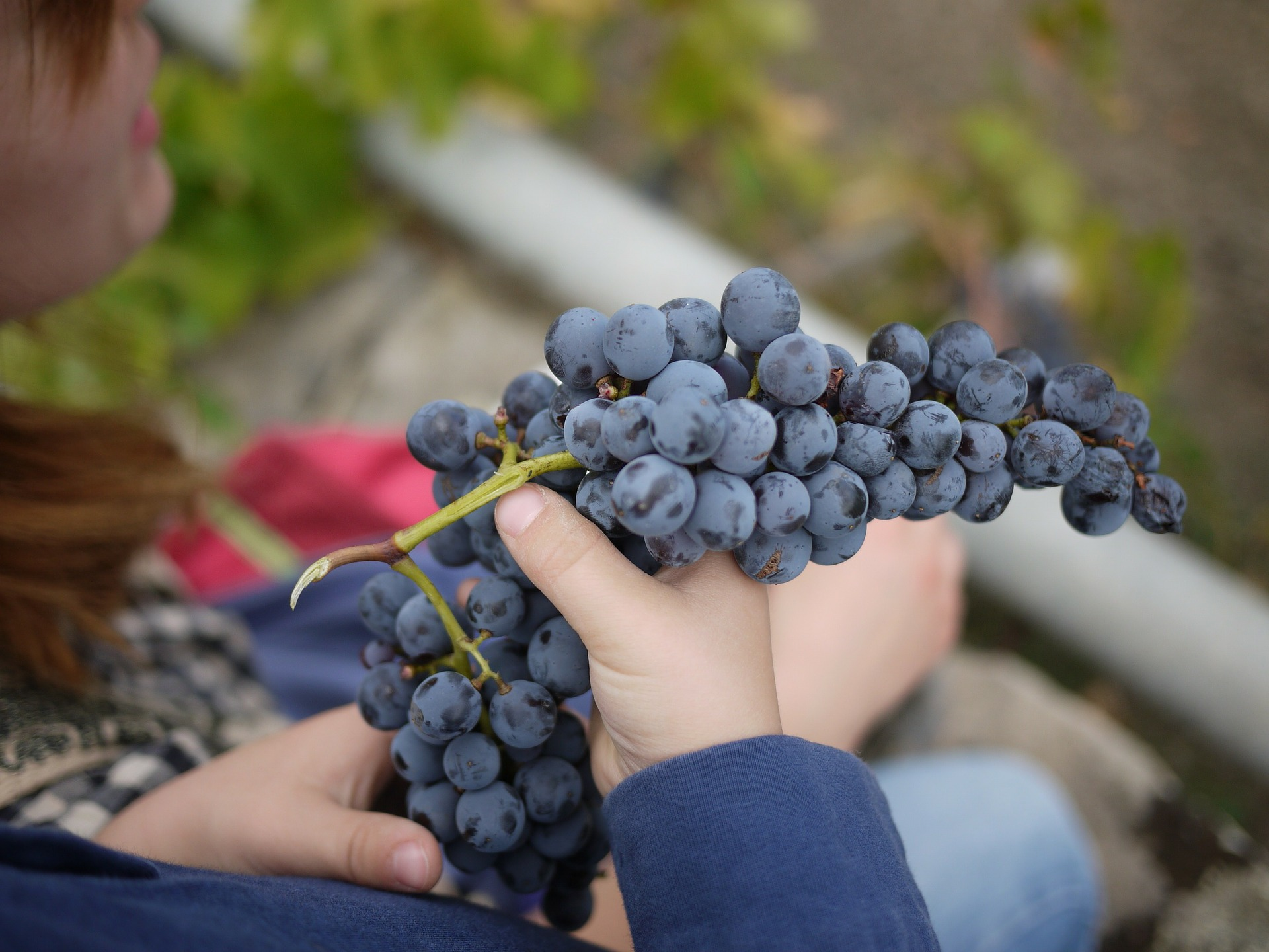 Grape Collection, Tourism - Itineraries - Greek wine