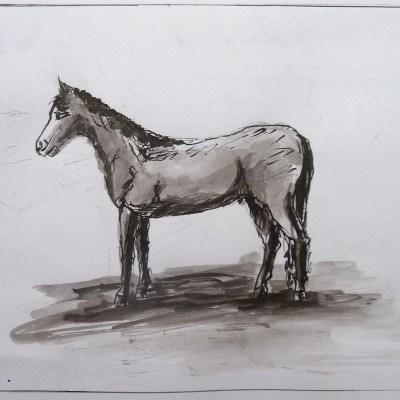 2009 - Pferd, 50x40cm, Tusche