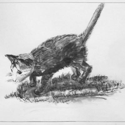 2009 - Junge Katze I, 50x40cm, Tusche