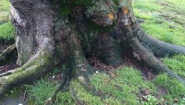 árbol_03