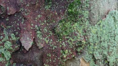 árbol_11