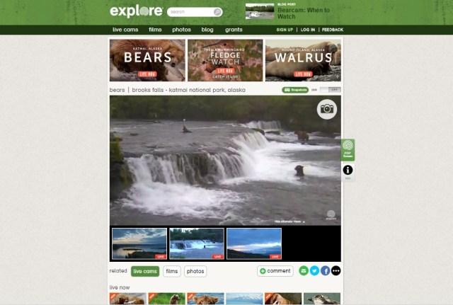 explore web