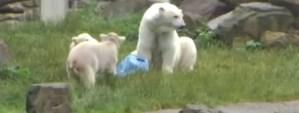¿Cómo cazan los osos?